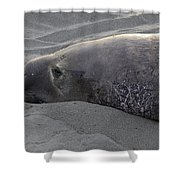 Elephant Seal 5 Shower Curtain by Bob Christopher