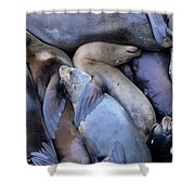 Seal Buddies Shower Curtain by Bob Christopher