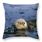 A Sea Otter Floats In A Tangle Of Kelp Throw Pillow by Paul Nicklen