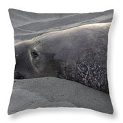 Elephant Seal 5 Throw Pillow by Bob Christopher