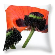 Flower Poppy In Studio Throw Pillow by Bernard Jaubert