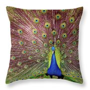 Peacock Throw Pillow by Carlos Caetano