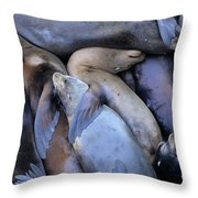 Seal Buddies Throw Pillow by Bob Christopher