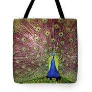Peacock Tote Bag by Carlos Caetano