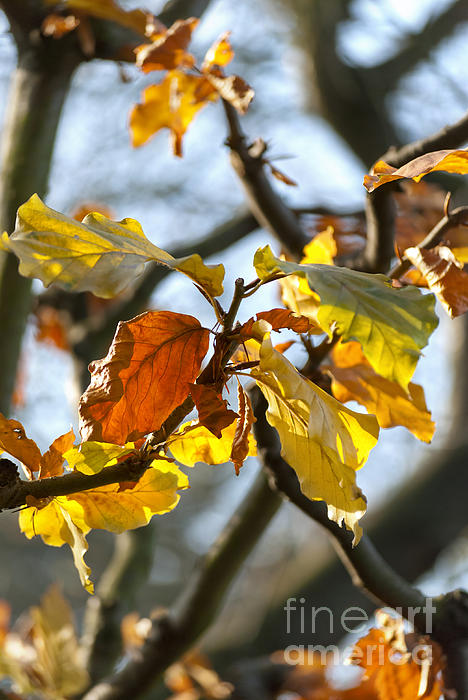 Autumn Photograph - Autumn Leaves by Design Windmill