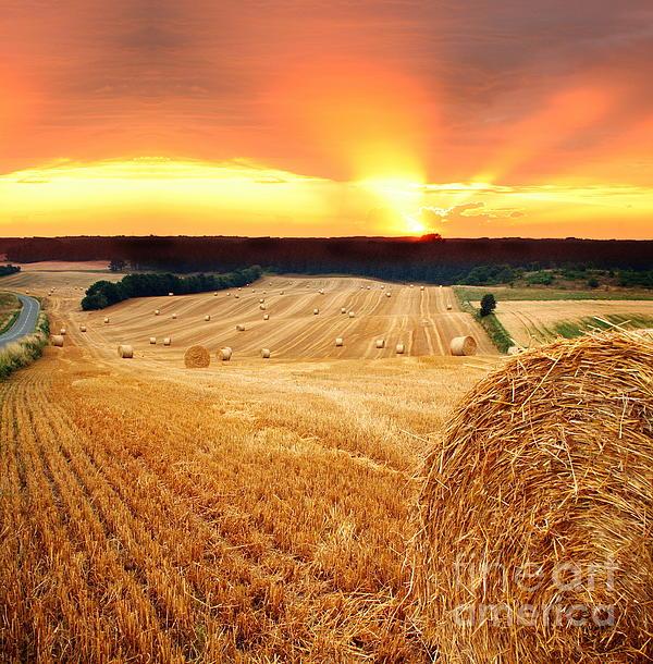 Beautiful Photograph - Beautiful Straw Bales by Boon Mee
