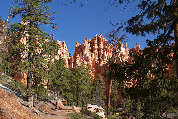Bryce Canyon National Park Photograph - Bryce Canyon National Park by Michael J Bauer