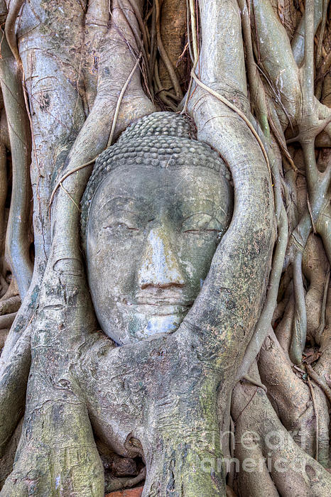 Bangkok Photograph - Buddha Head In Tree by Fototrav Print
