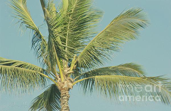 Aloha Photograph - Cocos Nucifera - Niu - Palma - Poolenalena Beach Maui Hawaii by Sharon Mau