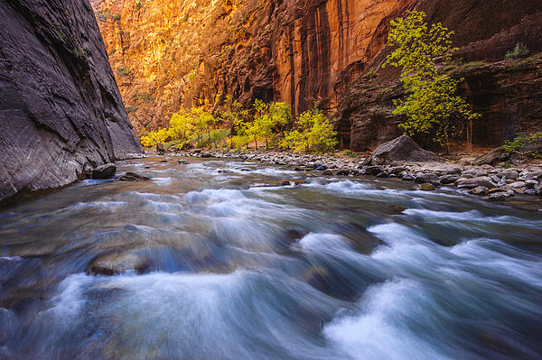 Zion Photograph - Cottonwood Row by Joseph Rossbach