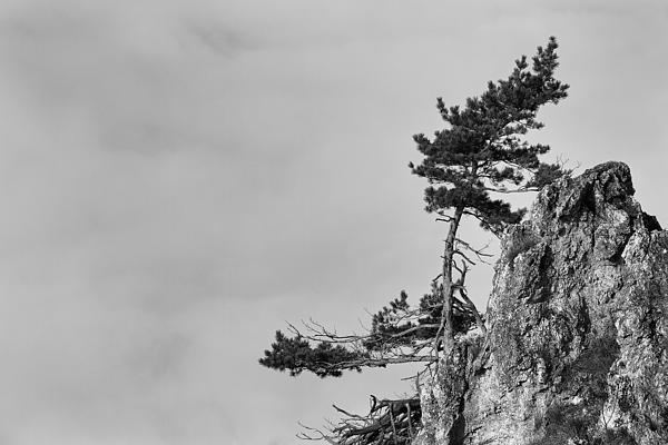 Landscapes Photograph - Defiant by Davorin Mance