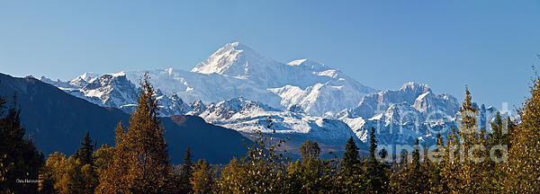 National Park Photograph - Denali by Chris Heitstuman