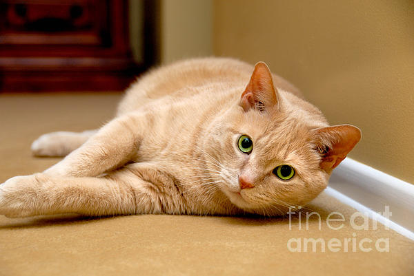 Alert Photograph - Feline Portrait by Amy Cicconi