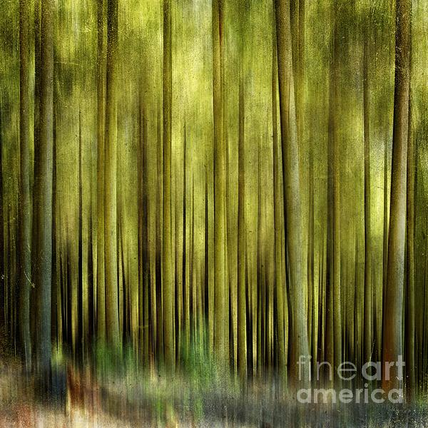 Abstract Photograph - Forest by Bernard Jaubert