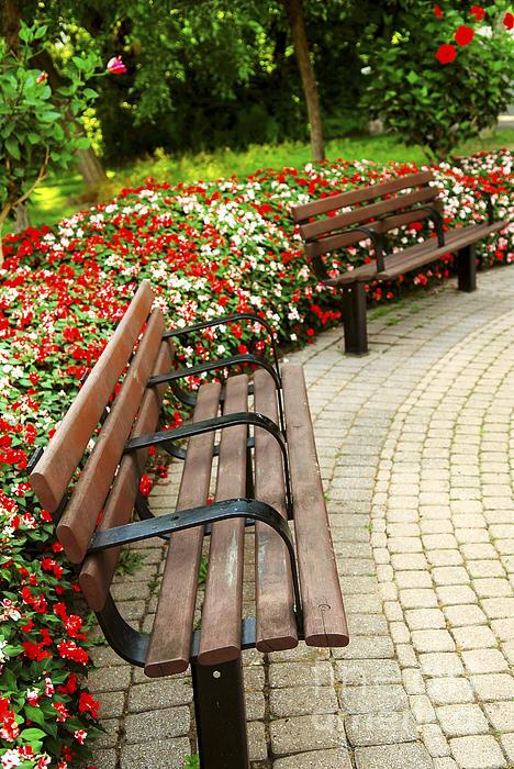 Garden Photograph - Formal Garden by Elena Elisseeva