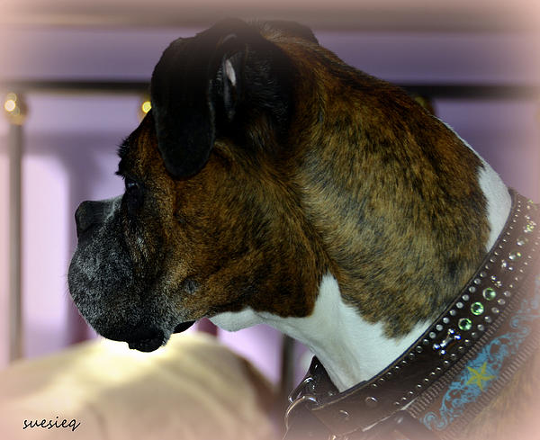 Dog Photograph - Gia by Sue Rosen
