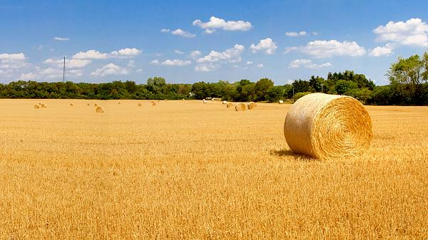 Hayfield Photograph - Golden Harvest by Roger Gallamore