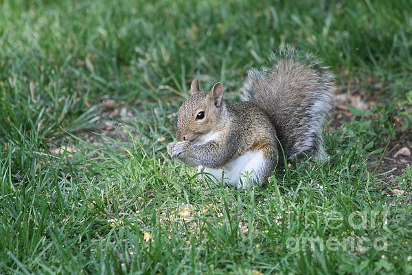 Squirrel Photograph - Grey Squirrel by Lori Tordsen