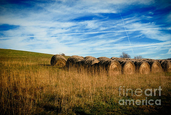 Agriculture Photograph - Hay Bales And Contrails by Amy Cicconi