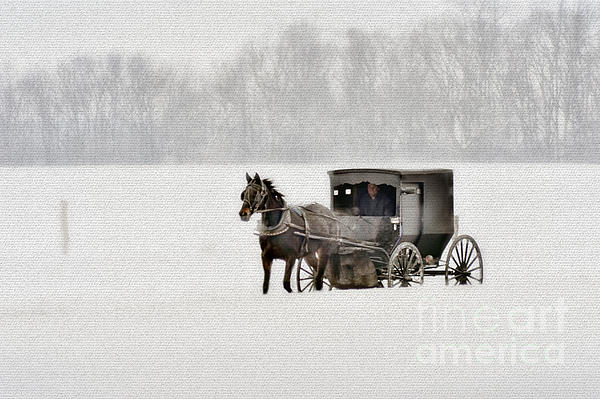 Horse Photograph - Horse And Buggy In Snow Storm by Dan Friend