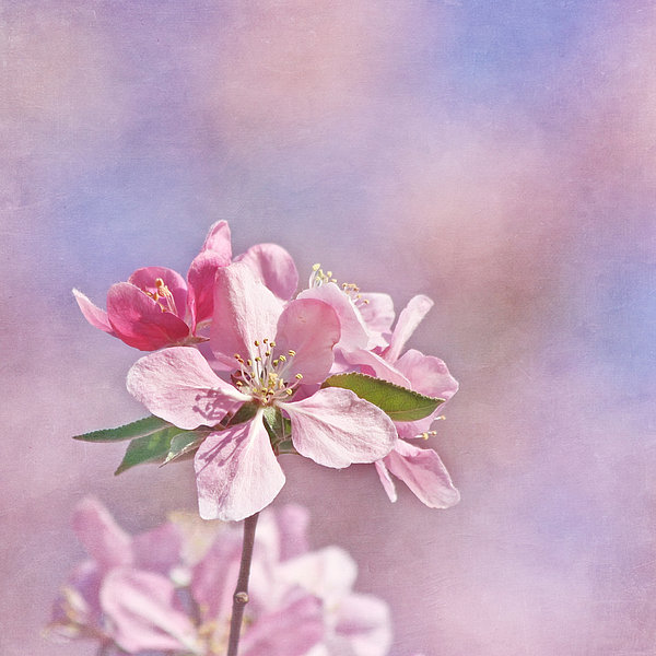 Flower Photograph - It Must Be by Kim Hojnacki