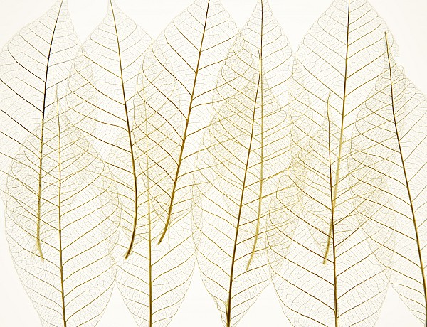 Arranged Photograph - Layered Leaves by Kelly Redinger