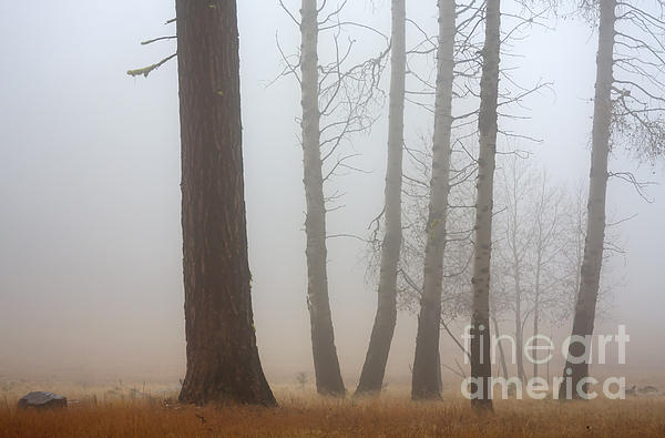 Fog Photograph - Out Of The Fog by Mike  Dawson