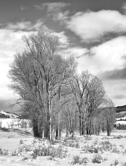 Black & White Photograph - Peaceful Moments by Sandra Bronstein