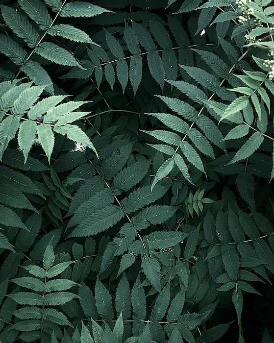 Plants In Forest Photograph by Alexandr Sherstobitov