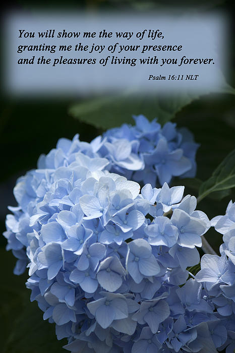 Bible Photograph - Psalm 16 11 by Inspirational  Designs