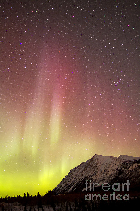 Vertical Photograph - Red Aurora Borealis Over Carcross by Joseph Bradley