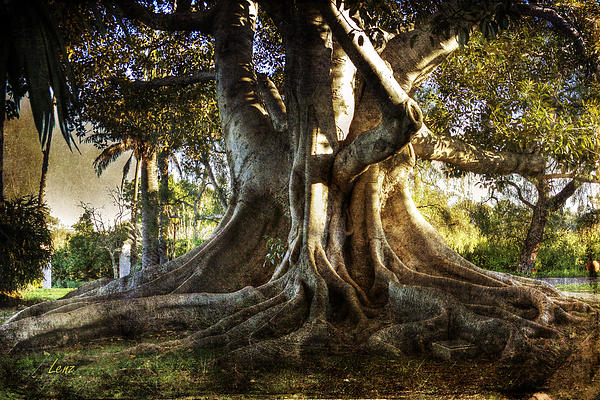 Tree Photograph - Roots by George Lenz