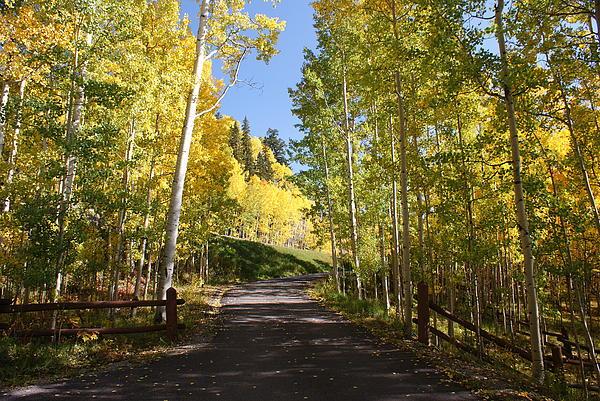 Landscape Photograph - Telluride Colorado Fall by Michael J Bauer