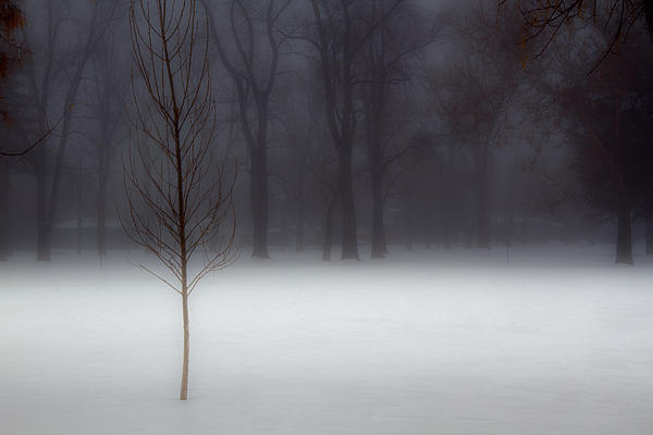 Winter Photograph - Winter In The Park by Utah Images