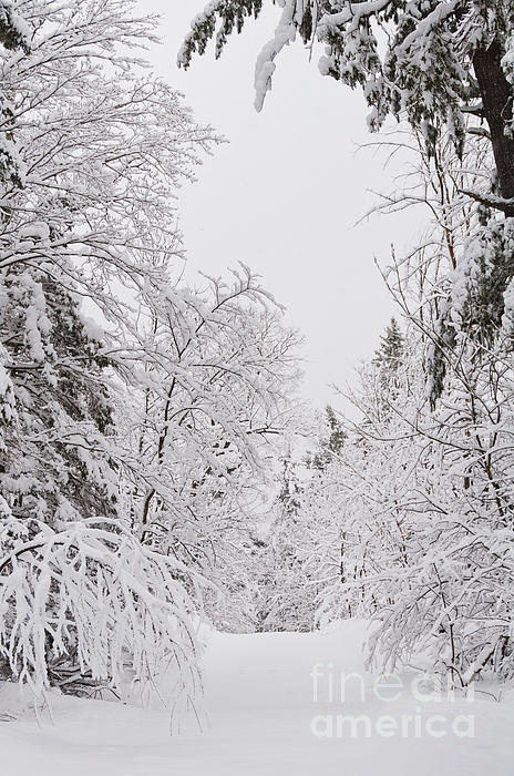Landscapes Photograph - Winter Road by Cheryl Baxter