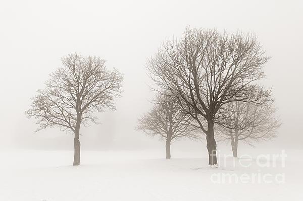 Trees Photograph - Winter Trees In Fog by Elena Elisseeva
