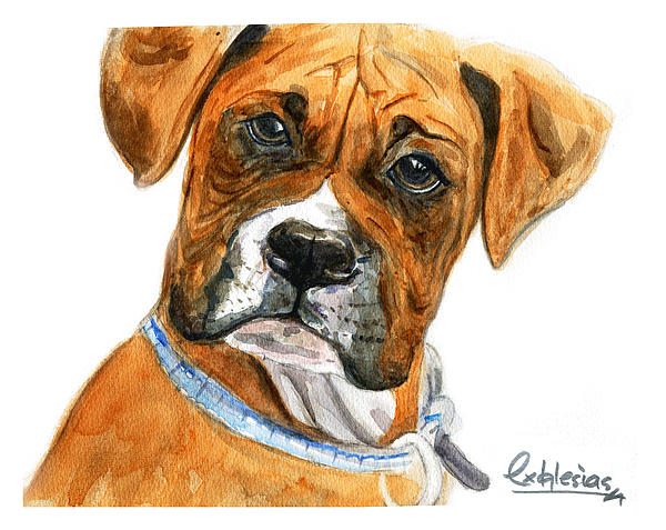 Watercolor Painting - Boxer by David Iglesias