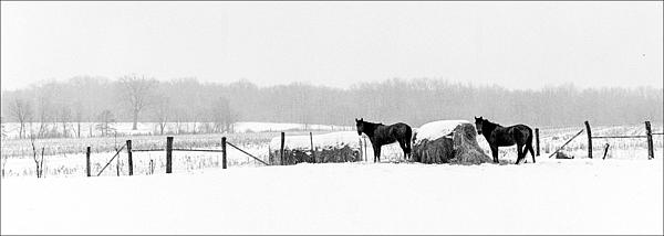 Kentucky Landscape Photograph - Cold Stare by Wendell Thompson