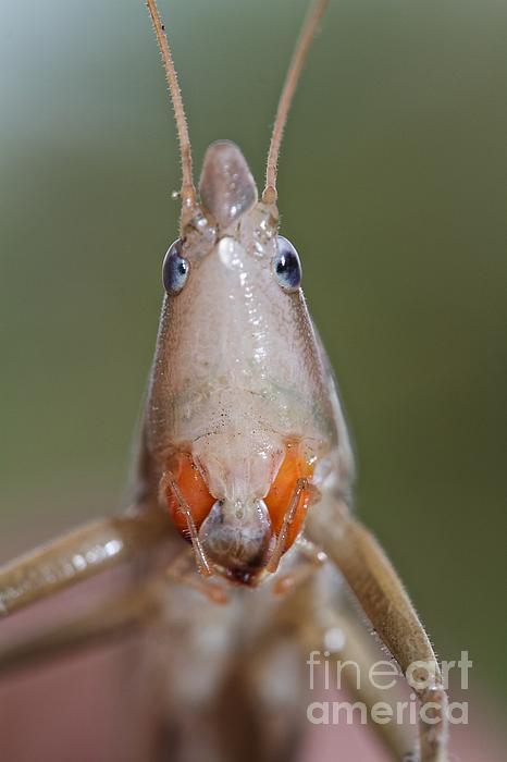 Stange Photograph - Do I Bug You by Gary Bridger
