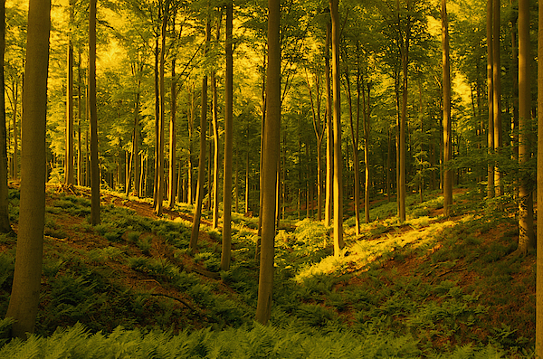 Forest 2 Photograph by David De Lossy