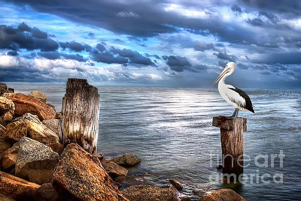 Pelican Digital Art - Pelicans Pride by Shannon Rogers