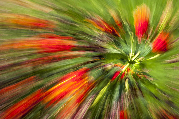 Abstract Flower Photograph - Swirl Of Red by Jon Glaser