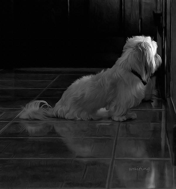 Pet Digital Art - Waiting by Hazel Billingsley