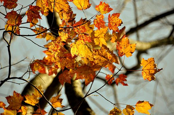 Autumn Photograph - 22nd Of September by JAMART Photography