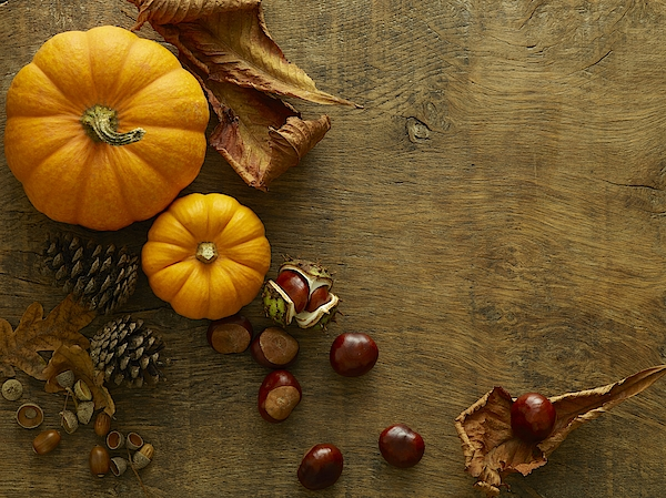 Autumn Still Life Photograph by Science Photo Library