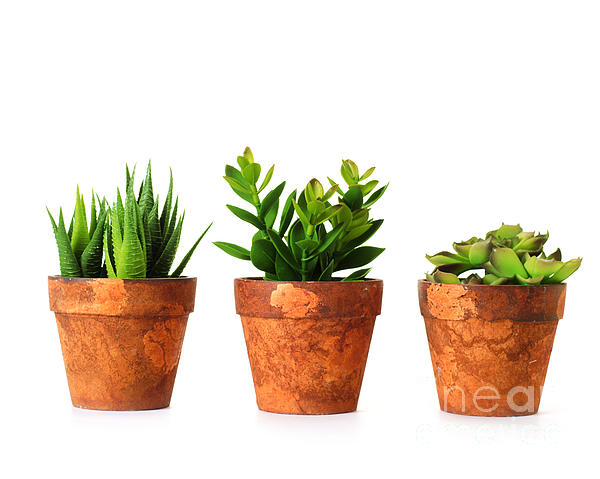 3 Photograph - 3 Indoor Plants by Boon Mee