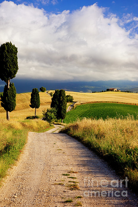 Cypress Photograph - Tuscany by Brian Jannsen