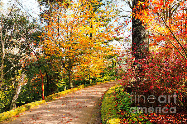 Park Photograph - Autumn Colors by Gaspar Avila