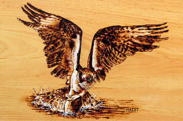 Bird Pyrography - Osprey by Ron Haist