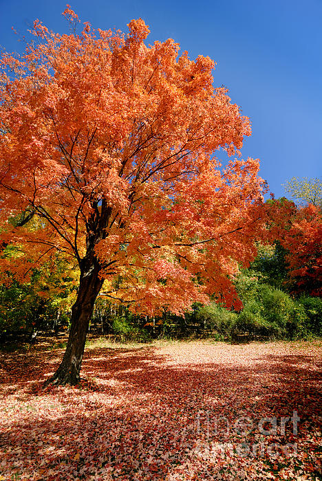 Autumn Photograph - A Blanket Of Fall Colors by Amy Cicconi